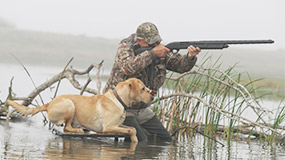 Trained Duck Hunting Dogs For Sale