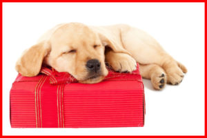 The Top 5 Gifts For Your Labrador Duck Dog Trainer